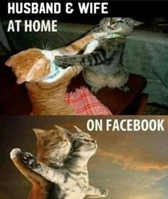 Cat Lovers Community - Your Daily Source of Cat Stories and Funny Cat Memes Funny Animal Photos, Funny Animal Jokes, Funny Dog Memes, Crazy Funny Memes, Really Funny Memes, Funny Animal Pictures, Cute Funny Animals, Funny Relatable Memes, Funny Images