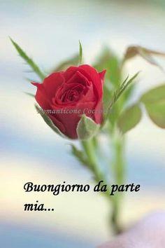 http://ift.tt/2DKoHgG Frasi di buongiorno sms di buongiorno messaggi di buongiorno buongiorno per te bongiorno per whatsa