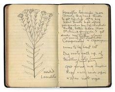 Thomas Edison's rubber journal