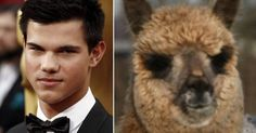 18 Animals That Look Like Celebrities
