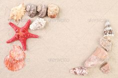 Sea shells and stars on sand. ...  backgrounds, beach, coast, cockleshell, color, conch, copy, decoration, image, nature, ocean, red, resort, sand, sea, shell, shore, snail, souvenir, space, starfish, summer, tourist, travel, underwater, vacations