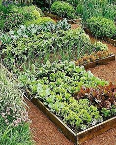 Small Vegetables Garden for Beginners_38 #gardeningforbeginners