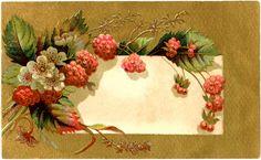 Vintage Raspberry Label -  Graphics Fairy