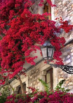 ITALIAN VISIONS PHOTOGRAPHY - PAUL MONTECALVO - florals TAORMINA, SICILY