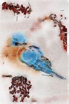 Eastern Bluebird  - Printable Art, Instant Downloadable Images, Fine Art. by edeblas on Etsy