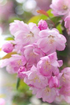 Есть цветы, которые цветут рано, и есть цветы, которые цветут поздно. Думаю, люди расцветают так же. Минеко Ивасаки [изображение] [изображение] [изображение] [изображение] [изображение] [изобра... — Дневная доза вдохновения... | B e a u t é