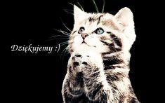 Strona główna - Crystal Launcher Cats, Animals, Gatos, Animales, Animaux, Animal, Cat, Animais, Kitty