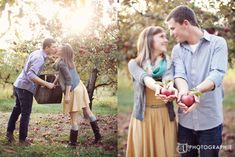 Apple orchard engagement shoot. Love.