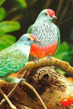 Birds Wallpaper: captura de pantalla