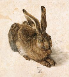 Albrecht Durer. Young Hare. 1502. My grandmother had a copy of this wonderful…
