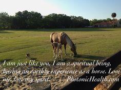 Do you see horses as spiritual beings?