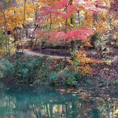 Crystal Bridges, Crystal Pond