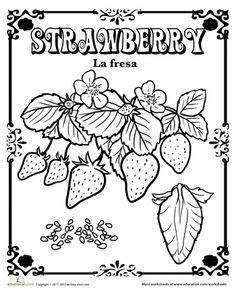 Raspberry in Spanish  Spanish Spanish worksheets and Raspberry