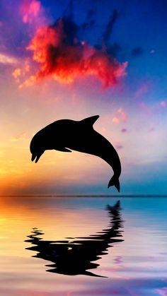 Dolphin bounce the sea
