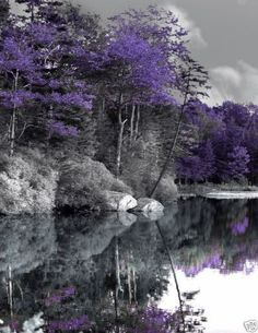 Purple Trees In Black And White