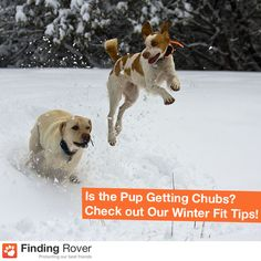 No excuses—keep your dog active during the winter season!