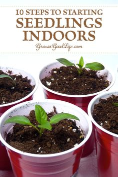 , 10 Steps to Starting Seedlings Indoors: Growing your own transplants from seed offers more flexibly and control over your vegetable garden. , 10 Steps to Starting Seedlings Indoors Planting Vegetables, Organic Vegetables, Growing Vegetables, Growing Plants, Organic Gardening, Gardening Tips, Indoor Gardening, Beginners Gardening, Pallet Gardening