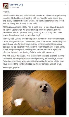 Gabe the Dog a famous internet pupper and meme has passed away. Sleep tight Gabe.<<<NOOOOO THIS IS THE DOG THAT I REALLY LIKED WHEN PPL MADE HIS BORKS INTO UNDERTALE SONGS OMG SO SORRY PUPPER :(((((