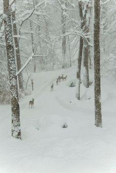 Beautiful Deers in Winter Forest