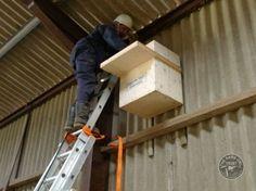 Barn Owl nestboxes for inside buildings Owl Nest Box, Owl Box, Baby Barn Owl, Owl Wings, Black Barn, White Barn, Bird House Plans, Bird Boxes, Nesting Boxes
