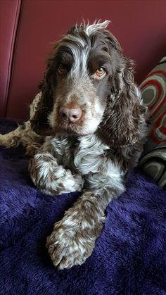 Hunde Foto: Carola und Hutch - Chillen auf dem Sofa Hier Dein Bild hochladen: http://ichliebehunde.com/hund-des-tages  #hund #hunde #hundebild #hundebilder #dog #dogs #dogfun  #dogpic #dogpictures