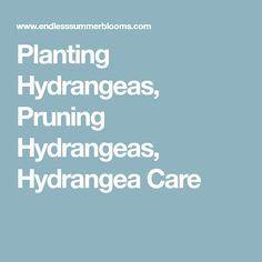 Planting Hydrangeas, Pruning Hydrangeas, Hydrangea Care