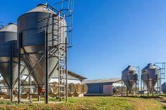 #fazendasfs #fazenda #pasto #paraiso #fa do holandês #vaca #leite #agronegocio #agronegocio #pitaia #cesariolange