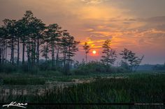 Sunset at the marsh over Cypress tree