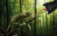 Chameleon Camera