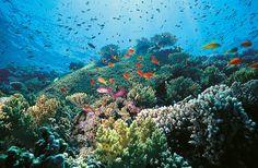 Unterwasserwelt von Hurghada