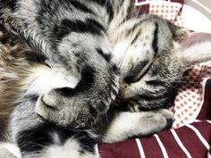 癒しの寝姿