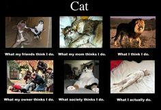 Bottom right. I like.