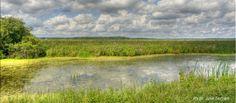 Montezuma Wildlife Refuge - Seneca NY