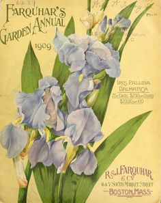 vintage pansy catalog art Pansies Violas Pinterest Pansies