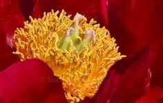 Blumeninsel Mainau - Bodensee - Süddeutschland   Mehr Fotos in meiner Blog-Gallery auf www.kuechencottage.de #fotografie #blumen #flowers #flora #hobbyfotografie #fotos #wunderschön #traumhaft #Bodensee #see #blumeninsel #mainau #Badenwürttemberg