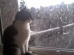 """""""I can't stand the rain, against my window..."""""""