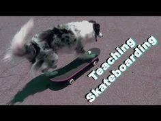 Dog Tricks Tutorial: Teach Skateboarding - YouTube