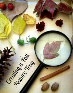 Invitation to Explore: Nature in the Fall from Edventures with Kids