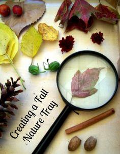 Invitation to Explore: Nature in the Fall