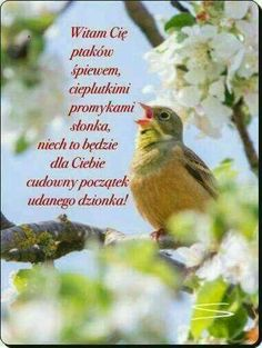 Online Photo Editing, Science And Nature, Gods Love, Good Morning, Love Quotes, Humor, Pictures, Buen Dia, Qoutes Of Love