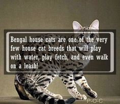 23 Crazy Facts About Animals | Page 22