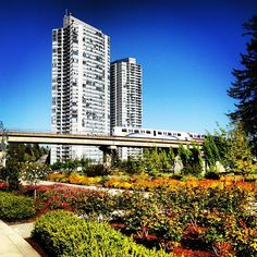 A gorgeous day in Holland Park, #SurreyBC!