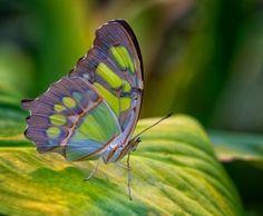 #beautiful #butterfly