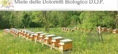Fantastiche Dolomiti: il miele delle Dolomiti