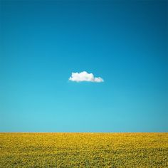 The Happy One - Lone Cloud and Sunflower Field Photo - 12 x 12 Fine Art Archival Photograph