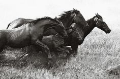 brumby-by-nick-leary-image-1-medium.jpg