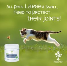 What are you using to protect your pet's joints? If it's not pawTree ask me why you need pawTree's Joint Support Plus. Animal Nutrition, Pet Nutrition, Healthy Pets, Cat Grooming, Happy Animals, Small Business Marketing, Pet Names, Cat Lovers, Dog Cat