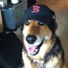 RedSoxNation!!! #socialgeneral #germanshepherd @Boston Red Sox