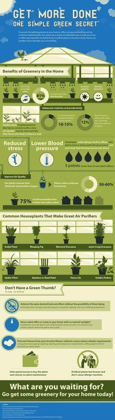 Infografía, plantas en casa (cada día me gustan más las infografías)
