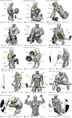 Full Body Workout is part of Biceps workout - Post with 3006 votes and 121599 views Shared by Full Body Workout Shoulder Workout Routine, Workout Routine For Men, Best Chest Workout, Gym Workout Tips, Biceps Workout, Chest Workouts, Fitness Workouts, Fun Workouts, Body Workouts